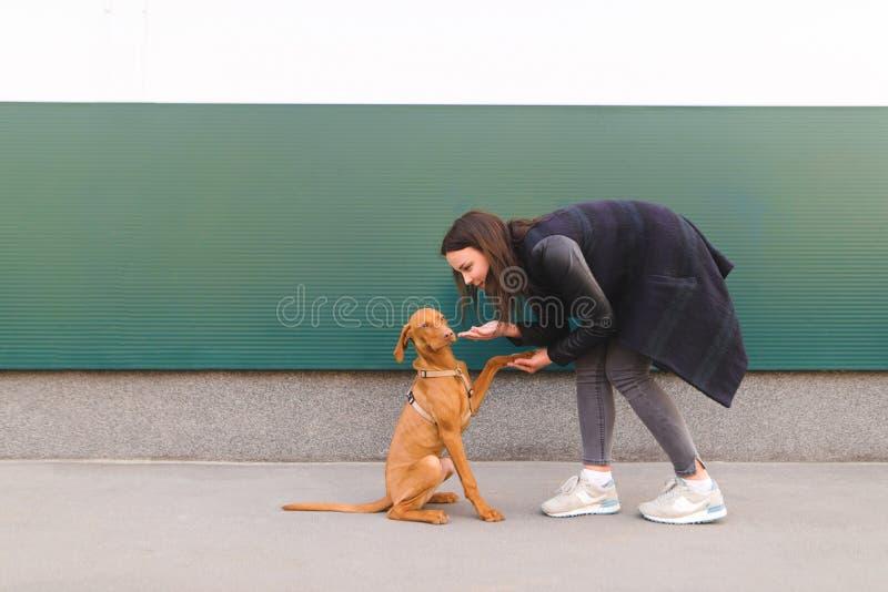 Flicka och lite hund mot bakgrunden av väggen En kvinna spelar med en valp royaltyfri fotografi