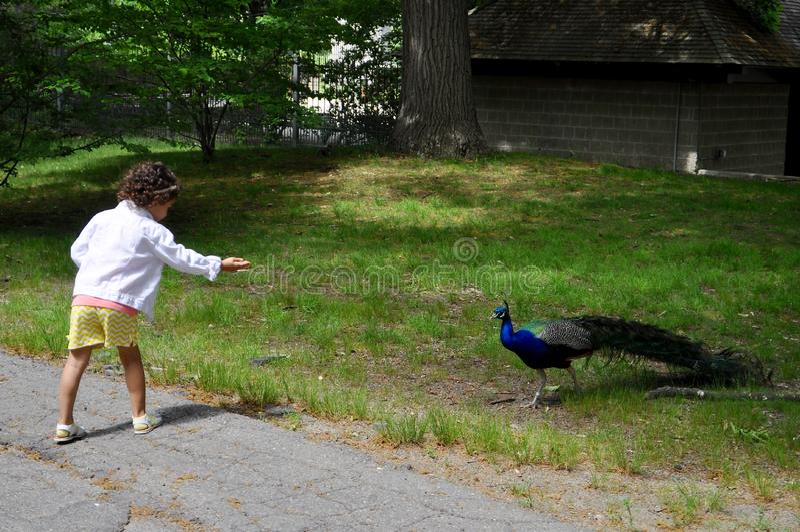 Flicka och påfågel arkivfoto