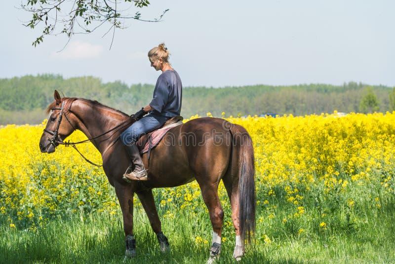 Flicka på hästryggridning royaltyfria bilder