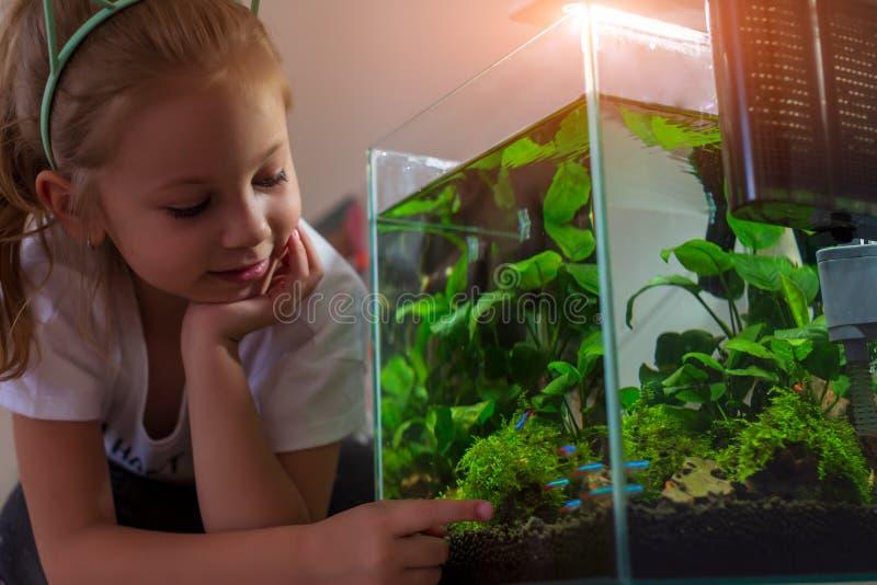 Flicka som beundrar det nano akvariet i hans hus p? natten arkivfoto