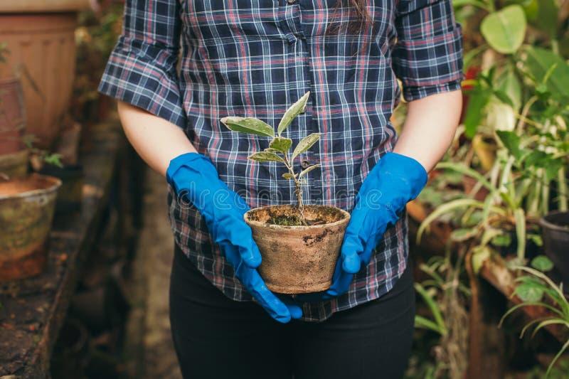 Flicka som bevattnar blommorna i växthuset på en lantgård royaltyfri fotografi