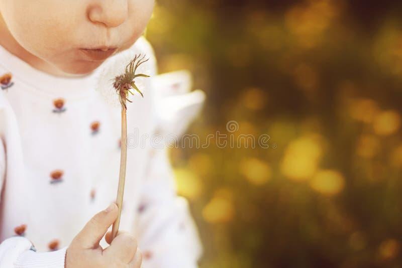 flicka som blåser på en maskros i ett fält royaltyfri bild