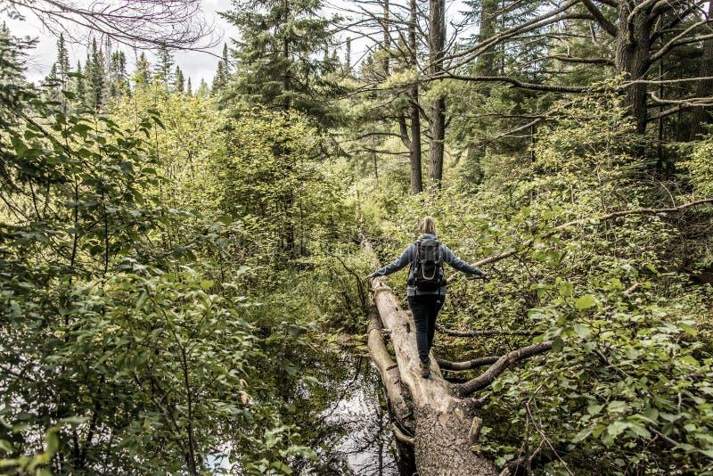 Flicka som fotvandrar i Kanada Ontario sjön av det naturliga lösa landskapet för två floder nära vattnet i Algonquinnationalpark fotografering för bildbyråer