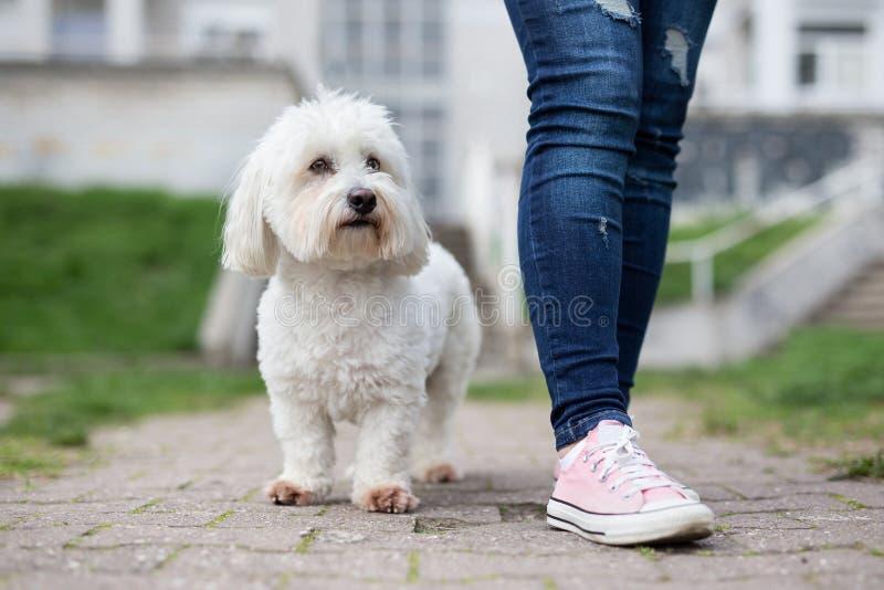 Flicka som går med den vita hunden arkivbild