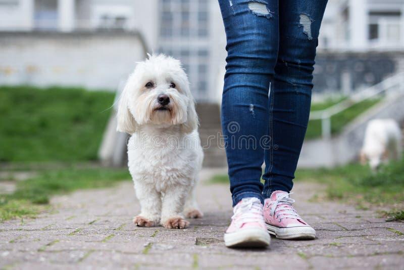 Flicka som går med den vita hunden royaltyfria foton