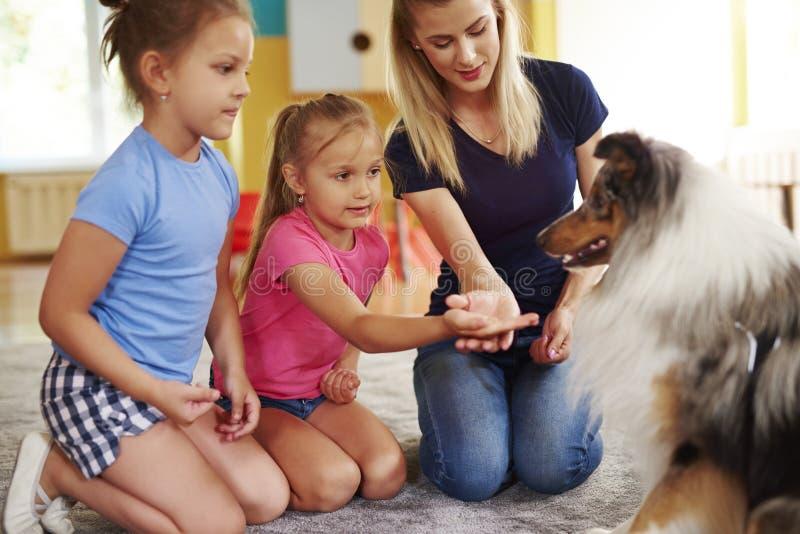Flicka som ger hund hennes hand arkivbild