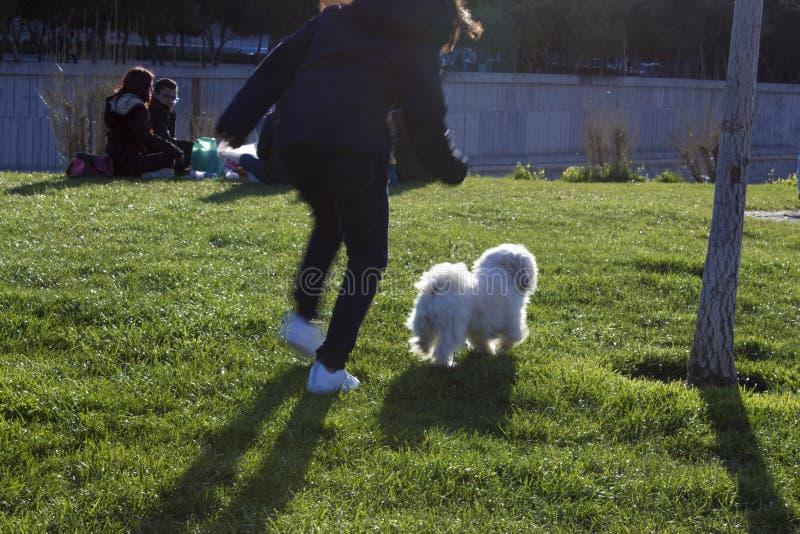 Flicka som jagar en hund arkivbild