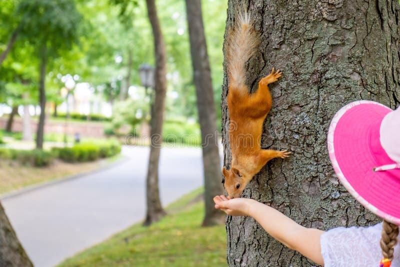 Flicka som matar den röda ekorren royaltyfria bilder