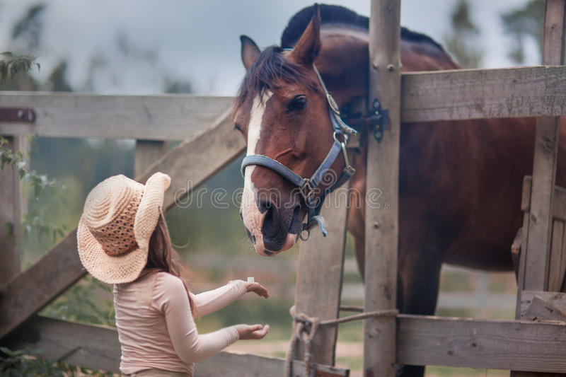 Flicka som matar henne hästen fotografering för bildbyråer