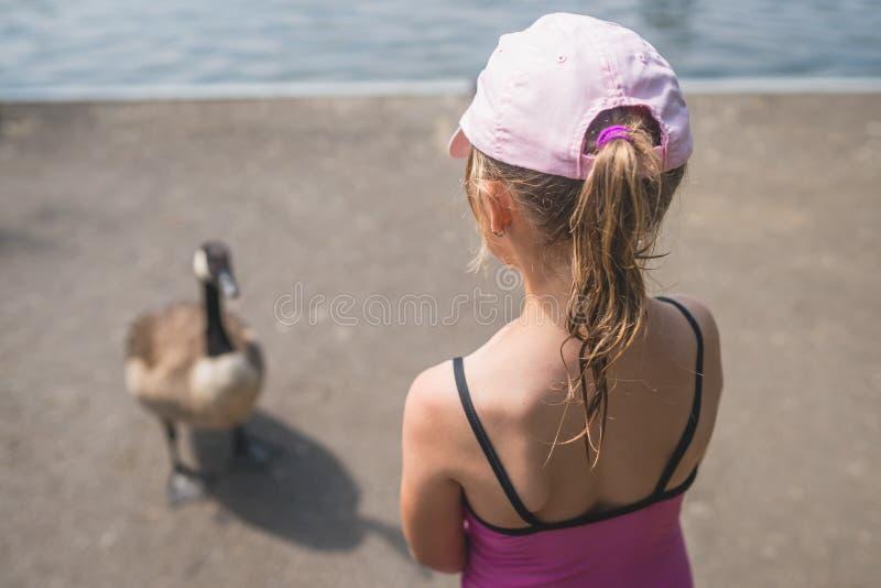 Flicka som ser en and fotografering för bildbyråer