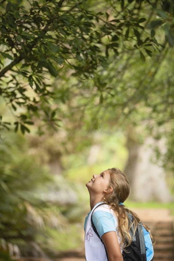 Flicka som ser upp på trädet i skog royaltyfria bilder