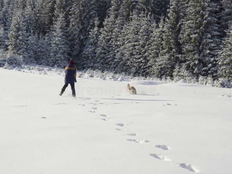 Flicka som spelar i snön med hunden royaltyfria foton