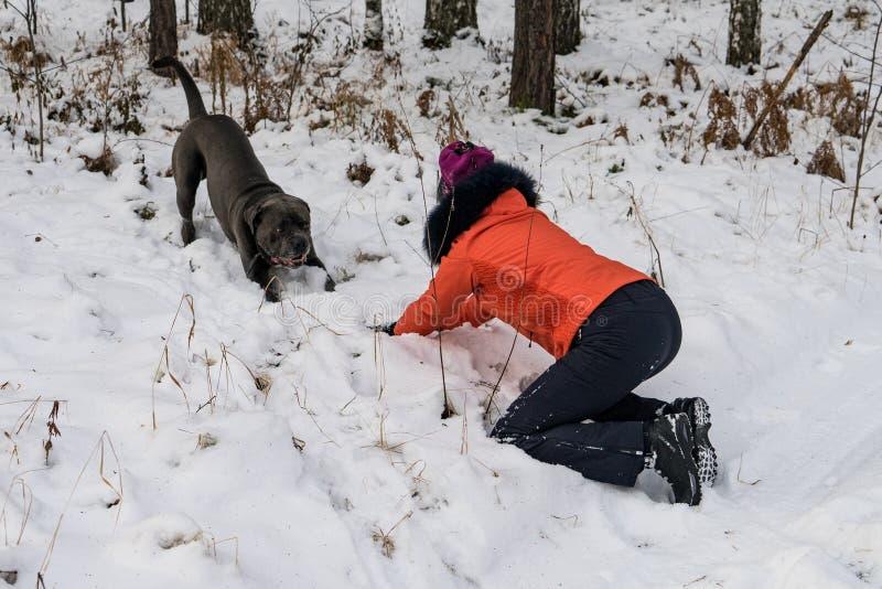 Flicka som spelar med en hund i skog fotografering för bildbyråer