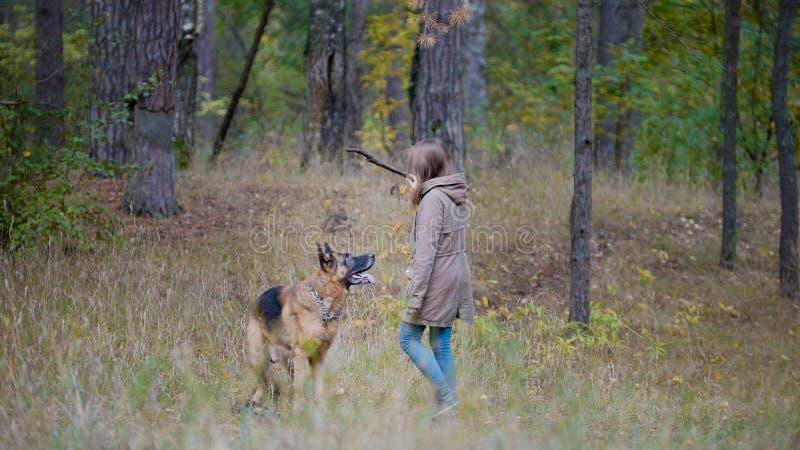 Flicka som spelar med en hund i träna arkivfoto