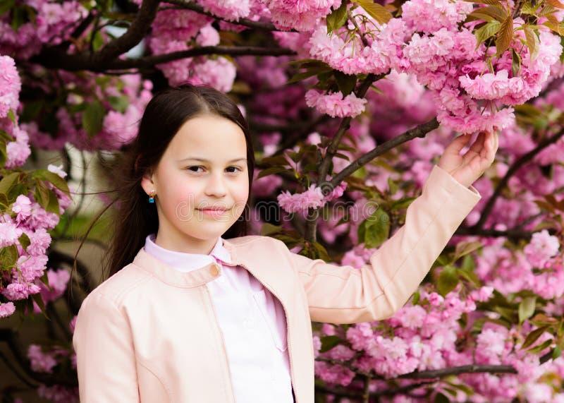 Flicka som tycker om den k?rsb?rsr?da blomningen eller sakura Det gulliga barnet tycker om naturen p? v?rdag Aromatiskt blomningb arkivfoto