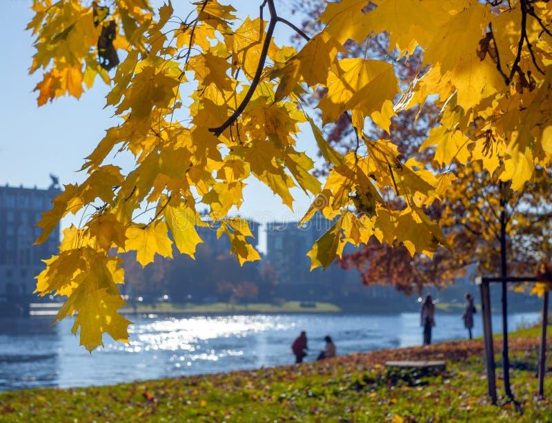 Flickaanseende för ung kvinna under gula sidor för höst på lönnfilialer mot den suddiga bakgrunden av floden royaltyfria foton