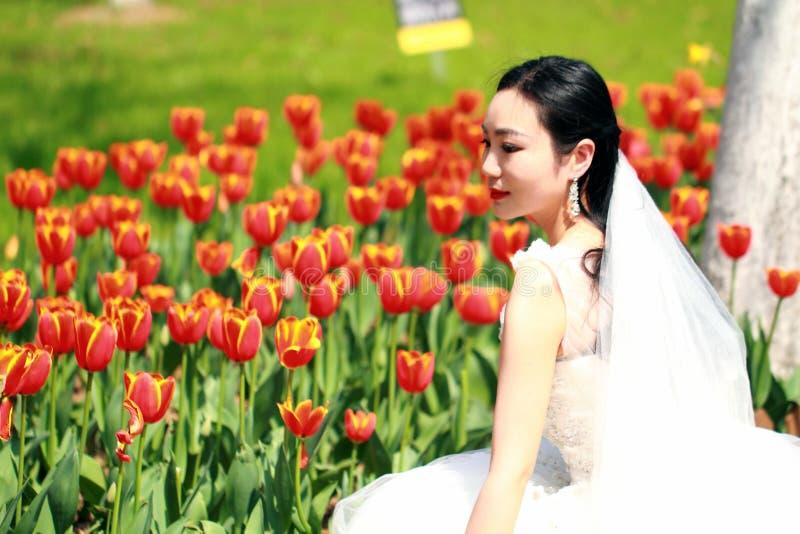 Flickabrud i bröllopsklänning med den eleganta frisyren, med den vita bröllopsklänningen i rött tulpanfält arkivfoton