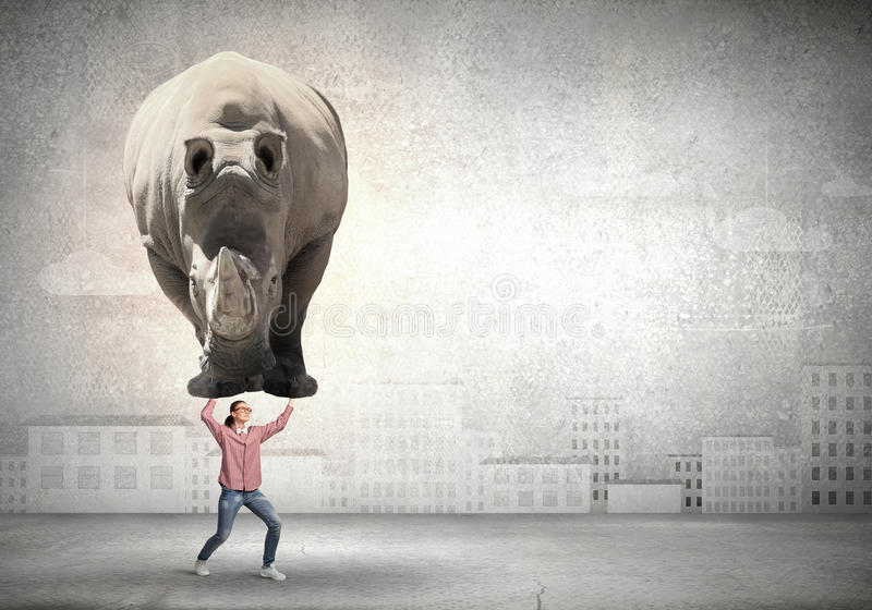 Flickalyftande noshörning royaltyfri fotografi