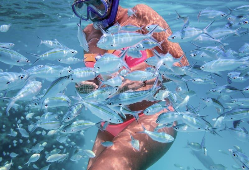 Flickan är snorkla, och mata fiskar i ett klart vatten av det indiska havet royaltyfri bild