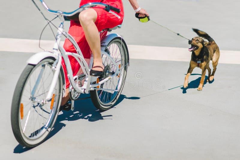 Flickan går en hund på en cykel Gå runt om staden med en hund och en cykel royaltyfri foto