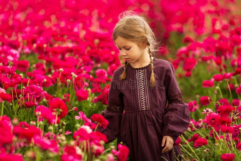 Flickan går till och med ett fält av röda smörblommablommor royaltyfri fotografi