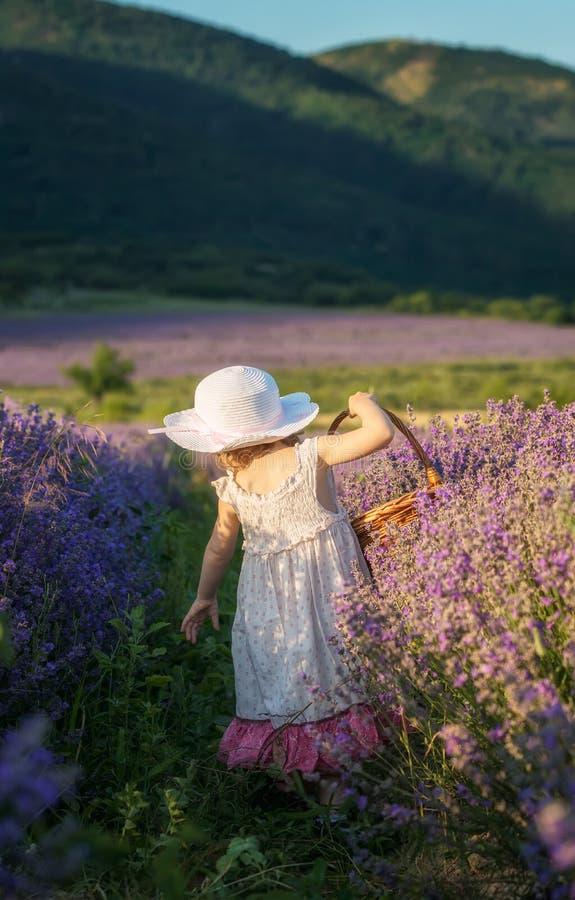 Flickan i en lavendel s?tter in arkivbilder