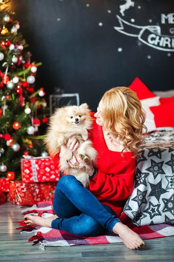 Flickan i en röd tröja med en spitzhund i sovrummet dekorerade för jul En kvinna spelar med hennes hund för den nya Yen royaltyfria bilder