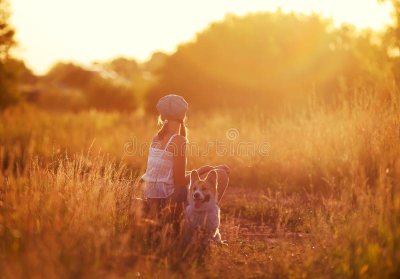Flickan i ett lock och en gullig röd valp av corgien sitter på en gammal resväska inte av vägen in i ett fält och en väntande på  arkivfoton