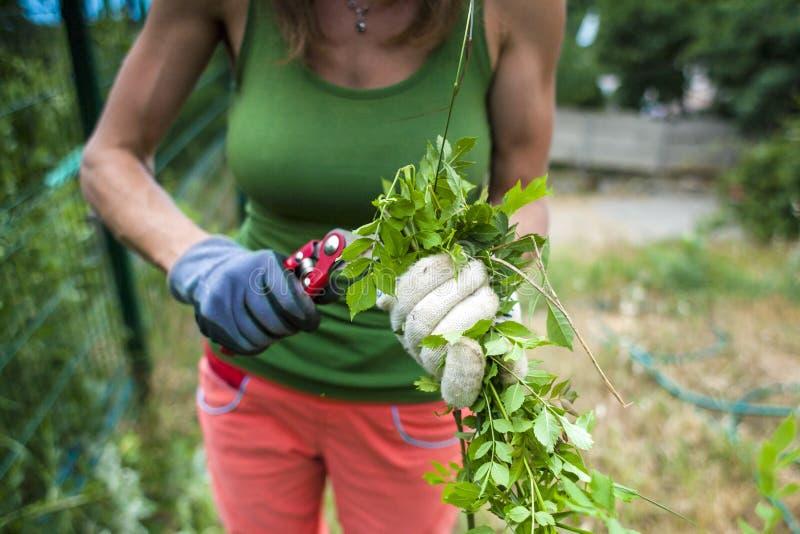 Flickan klipper växterna med en pruner royaltyfria foton