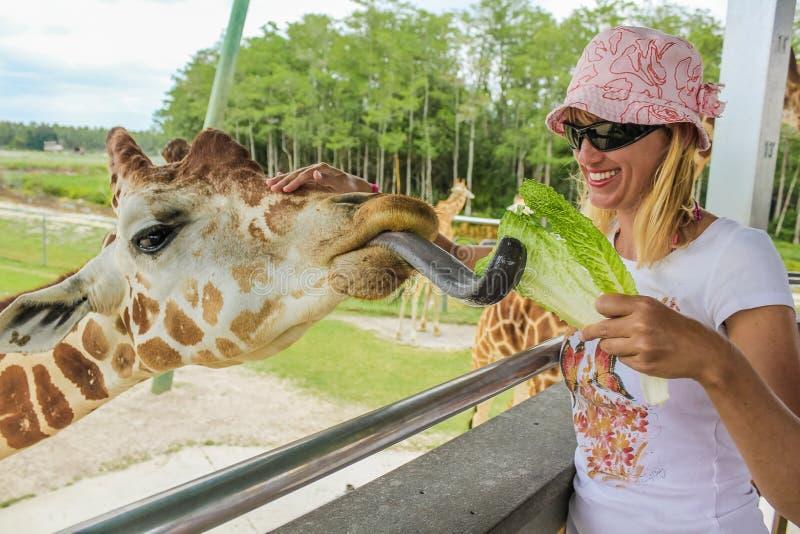 Flickan matar en giraff royaltyfri foto