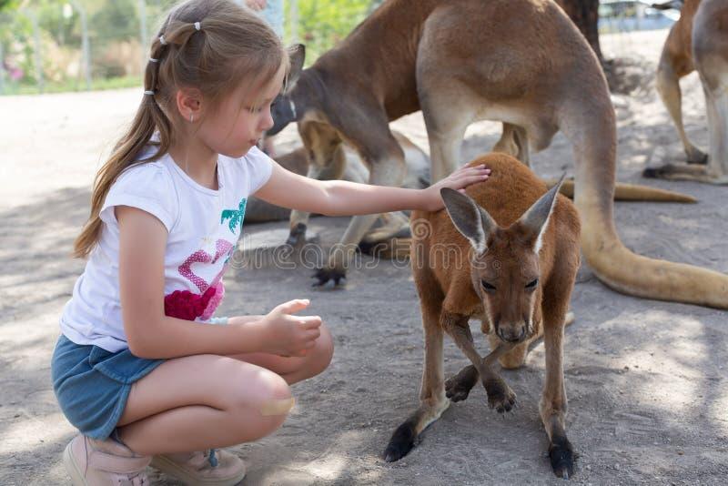 Flickan matar en k?nguru p? den australiska zoo Gan Guru i kibbutzer Nir David, i Israel royaltyfri bild