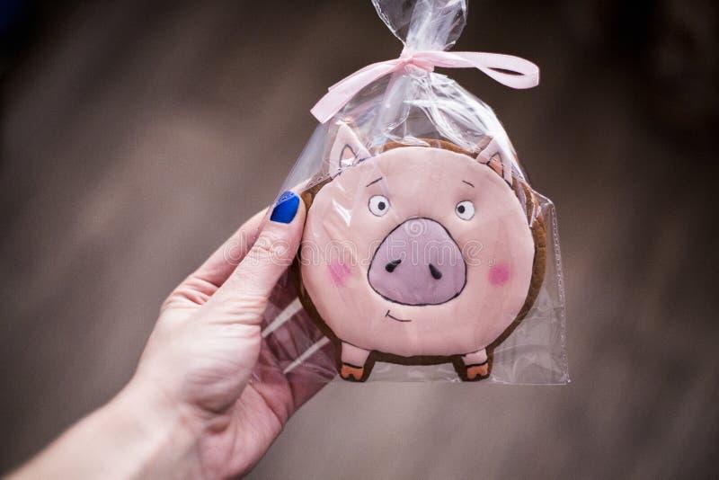Flickan med blått spikar håll i hand ett symbol av 2019 - ett svin rosa pepparkaka i form av påssjuka royaltyfria foton