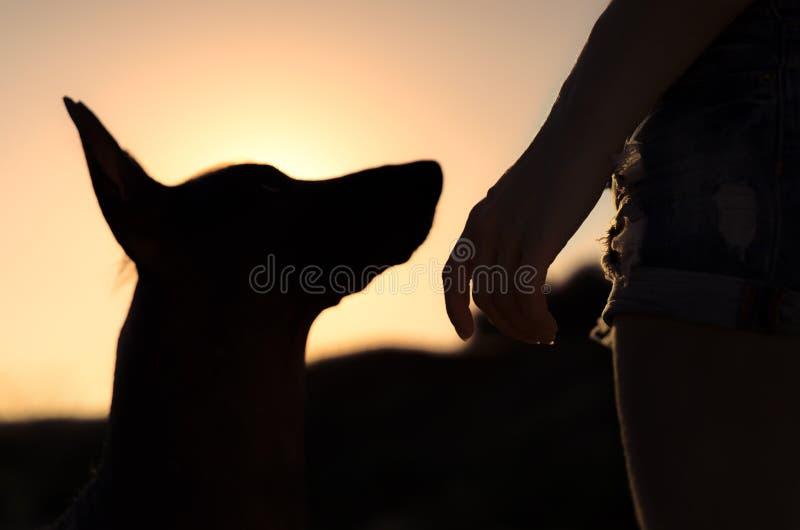 Flickan och hennes hund på går, silhouetted mot den sunsetting himlen arkivbilder