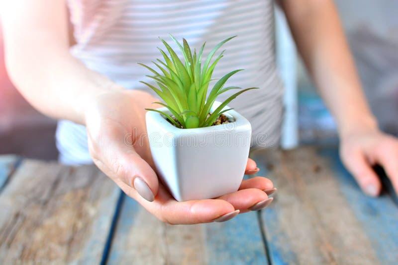 Flickan rymmer den lilla gröna växten i hennes hand på en träbakgrund royaltyfri bild
