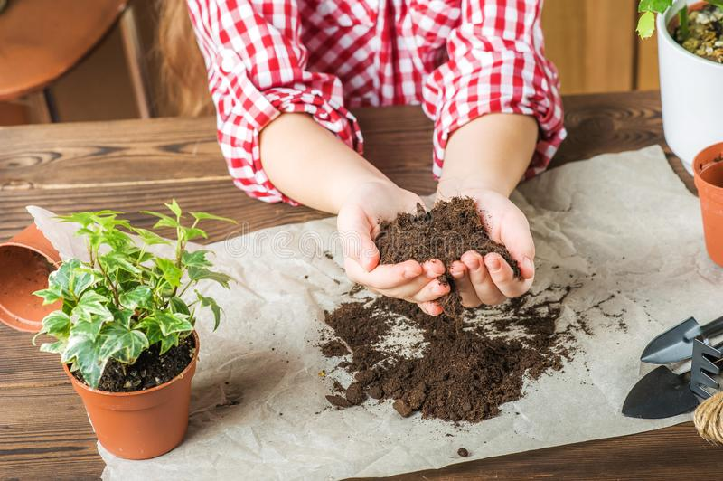 Flickan rymmer jordningen En flicka i en plädskjorta ska transplantera inlagda växter hemma Land plantor, händer royaltyfri fotografi