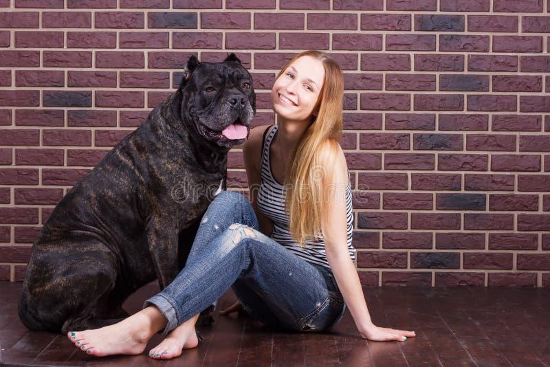 Flickan som sitter nära väggen bredvid hunden Cane Corso och henne, vippade på hennes huvud royaltyfria bilder