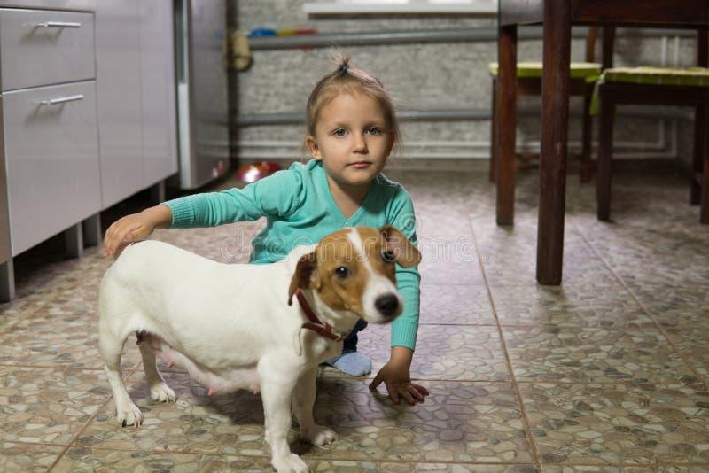 Flickan spelar med hunden av Jack Russell royaltyfri foto