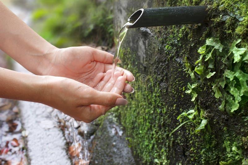 Flickan väljer upp gömma i handflatan in rent vatten från en vår royaltyfri foto
