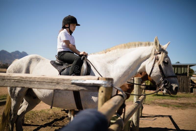Flickasammanträde på hästen i ranchen arkivbild