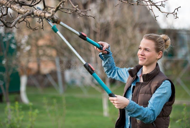 Flickaträdgårdsmästare som på våren arbetar trädgårds- och klipper trädet royaltyfri foto