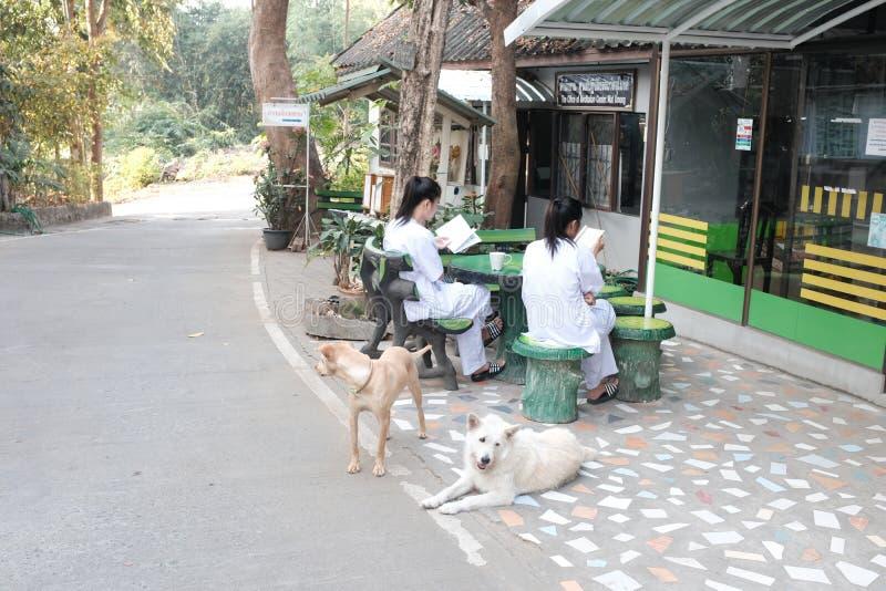 Flickor i meditationlägret Chiang Mai Thailand royaltyfri foto