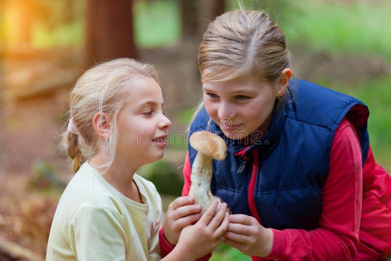 Flickor på en champinjonplundringståg arkivfoton