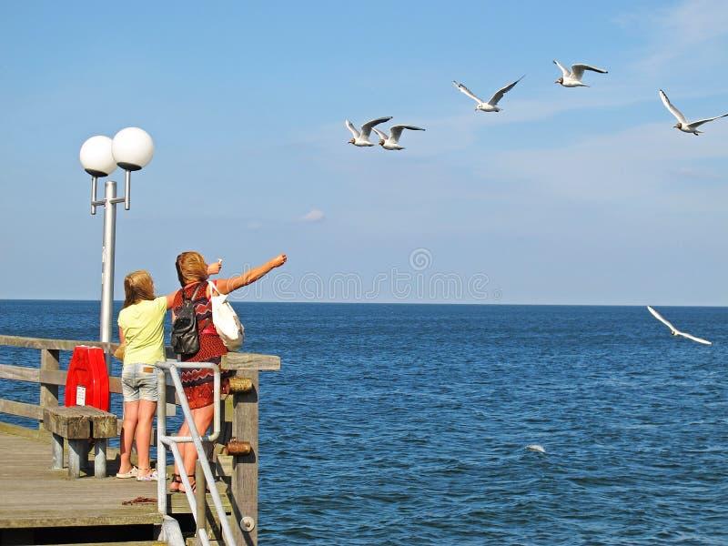 Flickor som matar havsfiskmåsar royaltyfria foton
