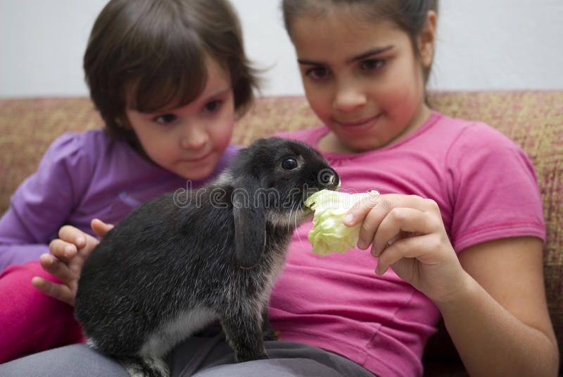 Flickor som matar hennes älsklings- kanin royaltyfri bild