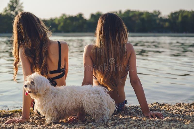 Flickvänner med hunden som tycker om på stranden arkivfoto