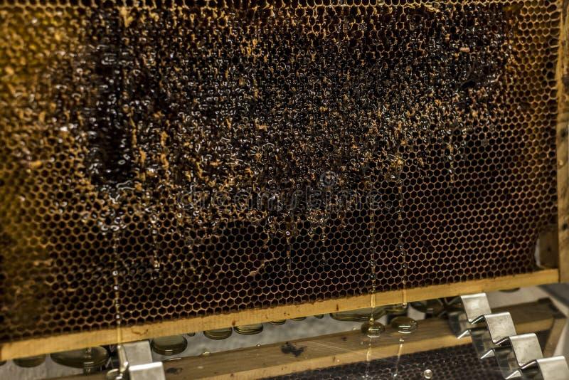 Fließen süße Honigtropfenfänger des glatten gelben goldenen Honigkammes während des Erntehintergrundes mit textspace lizenzfreies stockfoto