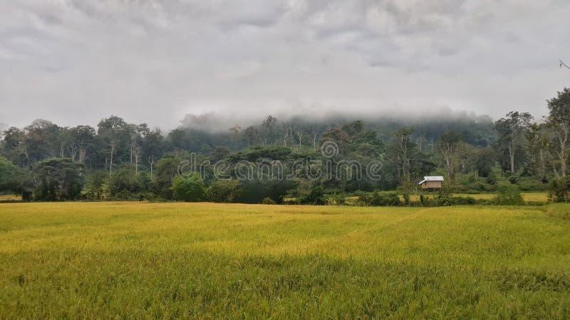 Flied landscape royaltyfria bilder