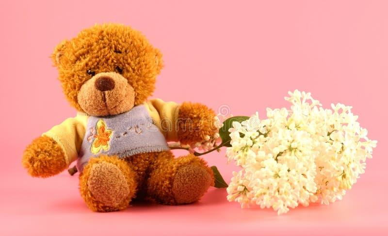 Flieder und ein Bär lizenzfreies stockfoto