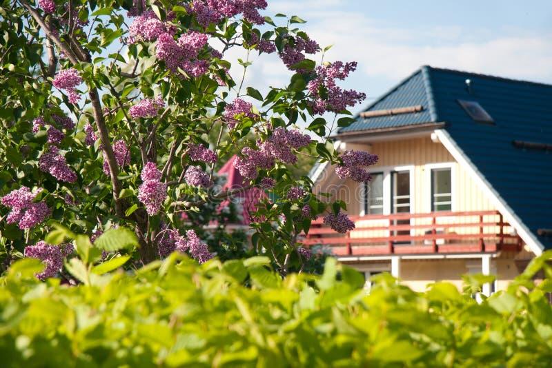 Fliederbusch nahe zum Haus stockfotografie