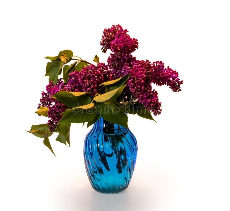Fliedern im blauen Vase stockfotos